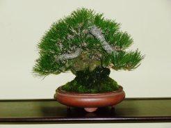 38th Gafu-ten in Kyoto 2013 - 21