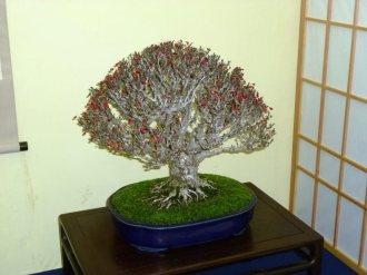 38th Gafu-ten in Kyoto 2013 - 23