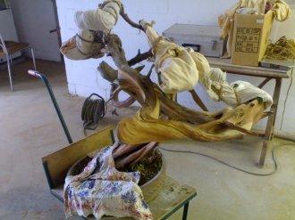 bois morts juniperus - sablage par takeo kawabe 0