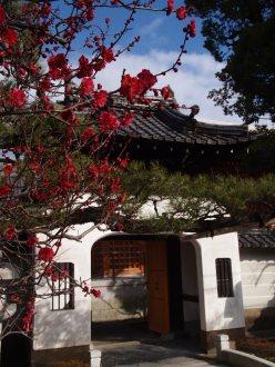 cerisiers en fleur au Japon hanami - 27
