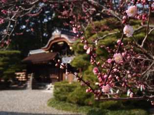 cerisiers en fleur au Japon hanami - 28