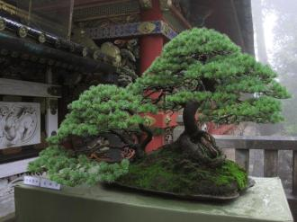 visite a nikko près de tokyo 3