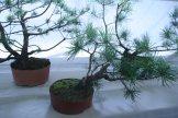 destination bonsai - christophe richy - 119