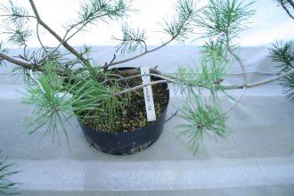 destination bonsai - christophe richy - 121