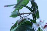 ikebana lorraine - roseau noir - 10