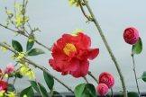 ikebana lorraine - roseau noir - 14