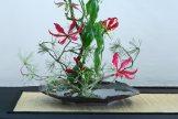 ikebana lorraine - roseau noir - 17