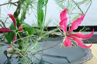 ikebana lorraine - roseau noir - 18