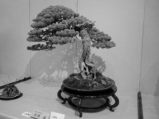 NB kokufu-ten 2013 - 34