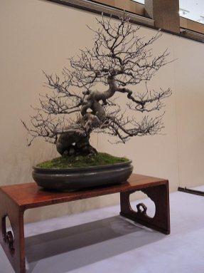 kokufu-ten 2013 - 51
