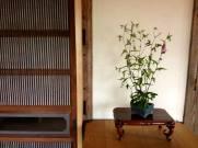 bonsai mori exposition 13