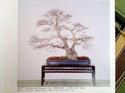 kokufuten 82 - le livre 11