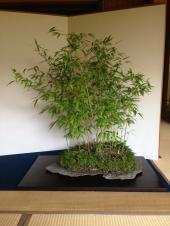 exposition de suiseki a tokyo 2013 - bambous