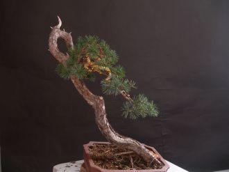 artisan bonsai 01