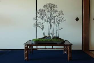 bonsai-uchikutei - genkokai - 03