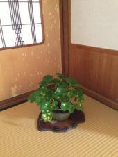 suiseki tokamashi 19