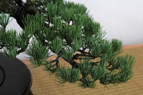 pin blanc han-kengai après nettoyage détail