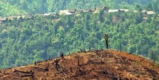 TERRE : en 20 ans, 10 % de ses  espaces sauvages ont disparu