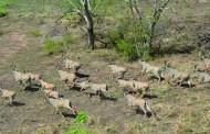 BURKINA : la chasse est ouverte depuis le 1er décembre