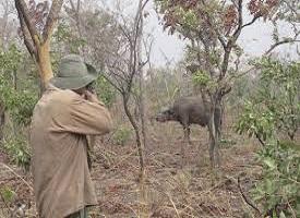 Faune Burkinabè : Des concessionnaires de zones de chasse en quête de sécurité de la faune