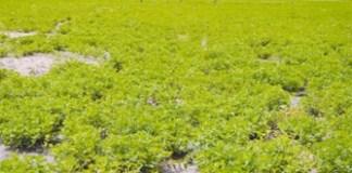 Un financement de la Bid pour la campagne arachidière
