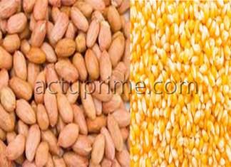 L'arachide et le maïs
