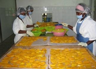 La transformation de mangue