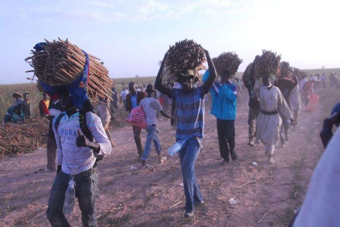 La récolte des champs de Khelcom