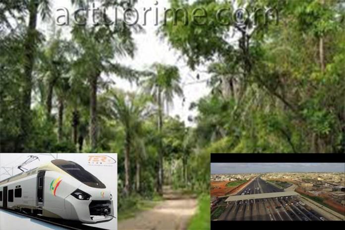 Le TER et la forêt classée de Mbao