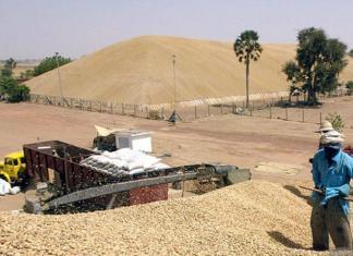 La surproduction d'arachide au Sénégal