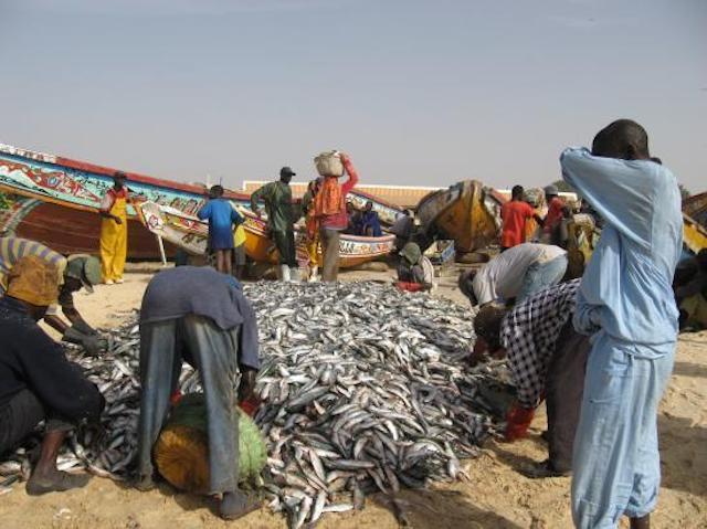 La place de la pêche artisanale au Sénégal