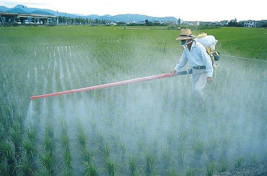 Alimentation : comment éviter les pesticides ?