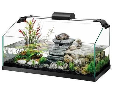 Lo básico del acuaterrario