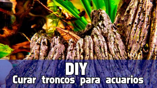 DIY como curar troncos y raices para acuarios.