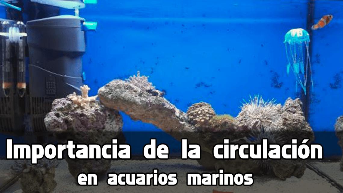 Circulación en acuarios de agua salada