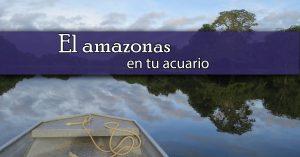 El amazonas en tu acuario
