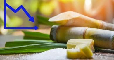 La caña de azúcar en Cuba y casi exterminada por el comunismo