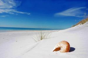 Jersey Beach
