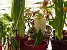 Indoor Winter Blooming Garden - Cultivated Nest