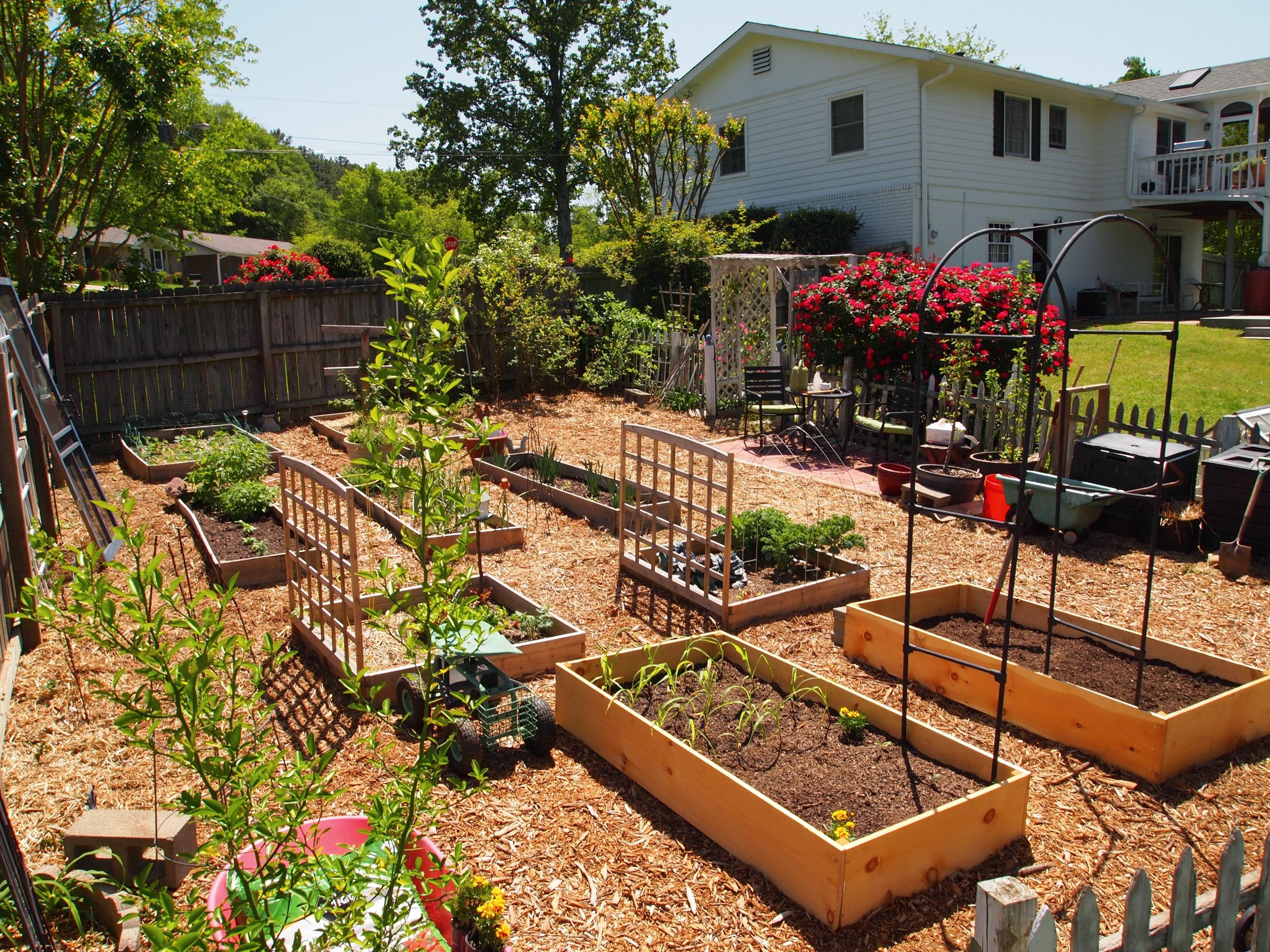 Home Veggie Garden HaynetCreative Com