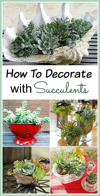 Succulent Container Ideas for Your Home