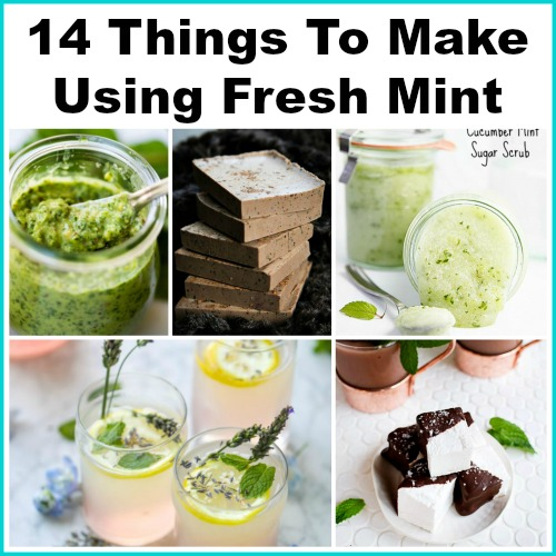 14 Things To Make Using Fresh Mint - A Easy To Grow Herb