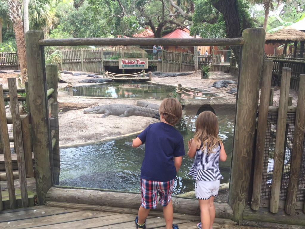 St Augustine Florida | Things to do with kids in St Augustine | Travel with kids | Family Travel Blog | Mandy Carter florida Travel writer | Acupful.com travel blog | Florida Travel | travel florida with kids | #SeeAllofFlorida | #LoveFl | Alligator Farm