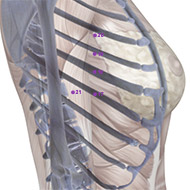 SP17 - Spleen Meridian 17 Acupuncture Point   AcuWiki Democratic Acupuncture