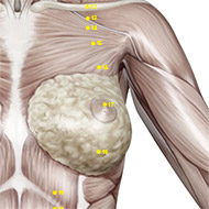 ST17 - Stomach Meridian 17 Acupuncture Point   AcuWiki Democratic Acupuncture