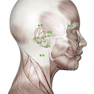 TB17 - Triple Burner / Sanjiao Meridian 17 Acupuncture Point   AcuWiki Democratic Acupuncture