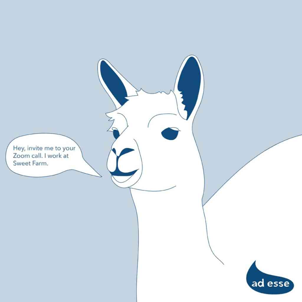 Ad Esse Consulting llama, workplace culture change, fun Zoom meetings