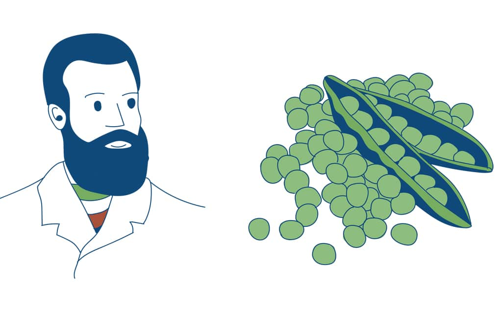 The Pareto principle and peas by Ad Esse Consulting