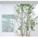 744427144_house-n-fujimoto-4978 744427144_house-n-fujimoto-4978