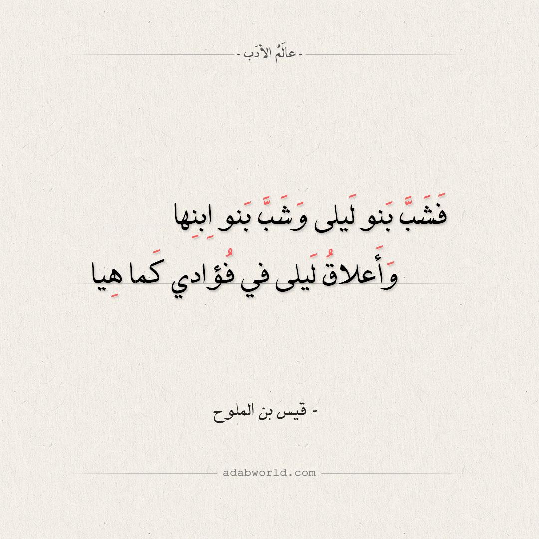 شعر قيس بن الملوح - فشب بنو ليلى وشـب بنو ابنها